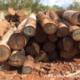 Article : Sédhiou:Dans 10 ans la région n'aura plus de forêt  (audio)