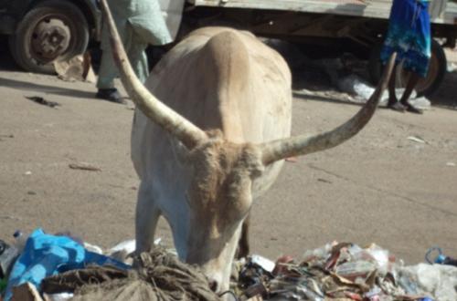 Article : Dakar: Ne jouez pas avec la santé des individus